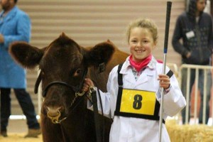 8 year old Lottie enjoying her first heifer expo winning two thirds.