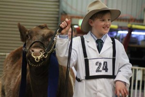 Sebastian and Belmore Butterfly K244 take out Reserve Junior Champion heifer.